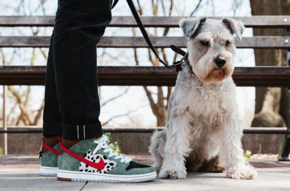Cusco Docenas lista  Nike SB Dunk High Dog Walker Dropping Tomorrow • KicksOnFire.com